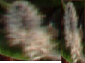 Resized vs Original cropped annotation.